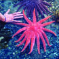A huge starfish. We find them along the shore on the BC coast.