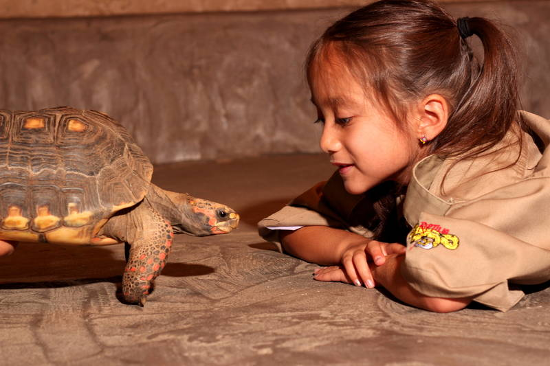 Camp at Reptilia Zoo is a wild adventure!