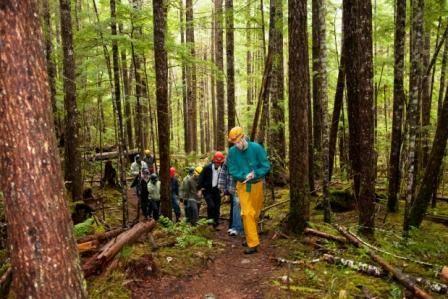 The Fossil Trail climbs through a West Coast Rainforest