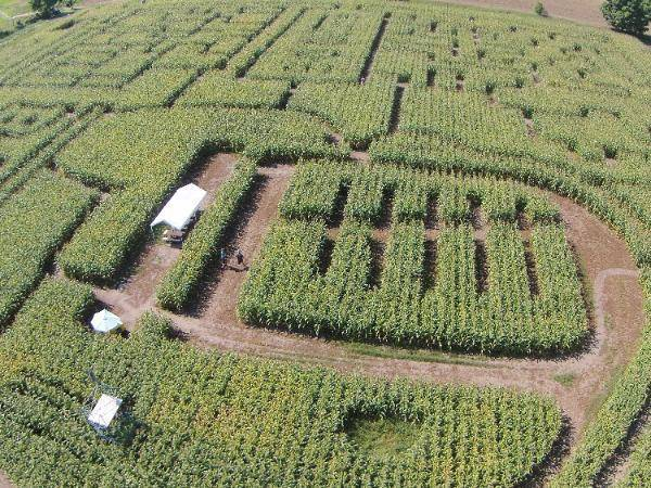 Visit to see this year's corn maze